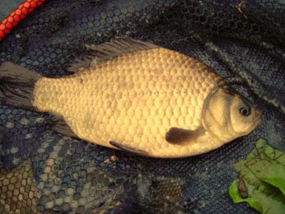 Картинка 46.  Богат и разнообразен животный мир водоёма.