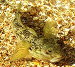 Мелкие полосатые рыбки.  У берега из съедобного плавают только бычки.