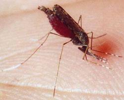 Аллергия на насекомых: как справиться с комарами, клещами и осами?