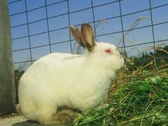 По уровню популярности декоративные кролики занимают далеко не последнее место среди...