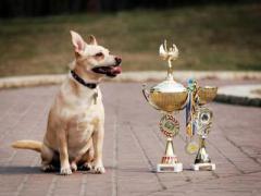 """Выставка беспородных собак.  Совместное мероприятие УКЦ  """"РЕКС """" и НП  """"Лучшие..."""