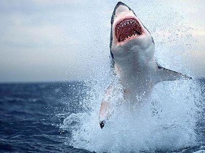 Специалисты штаба по поиску и задержанию акул, нападавших на людей в...