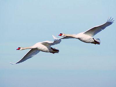 Перелётные птицы совершают традиционные сезонные перемещения от мест зимовок к местам гнездовий.